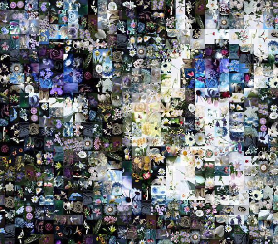 The Flower Cat Photo mosaic