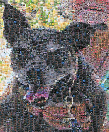 Photo mosaic maker (main view)
